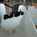 http://catstag.kr/data/editor/2009/thumb-9e6f56c833908f7563af2bb76954590d_1599554476_6792_130x130.png